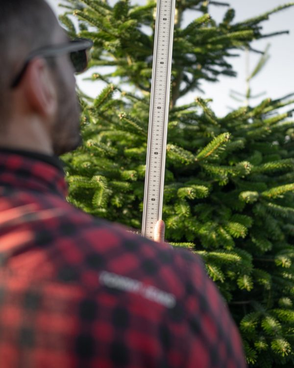 hand cut christmas trees for sale