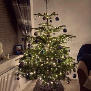 click and collect christmas tree