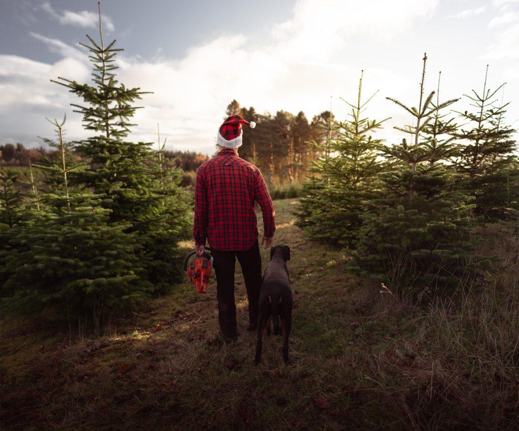 christmas tree for sale northumberland