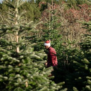 10 ft christmas tree delivered to your door northumberland